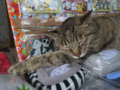 Cats of Houtong, #1243