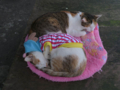 Cats of Houtong, #1245