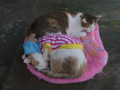 Cats of Houtong, #1246