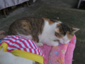 Cats of Houtong, #1247