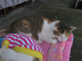 Cats of Houtong, #1248