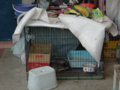 Cats of Houtong, #9698