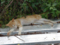 Cats of Houtong, #9701