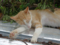 Cats of Houtong, #9702