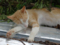 Cats of Houtong, #9703
