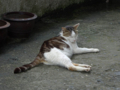 Cats of Houtong, #9707