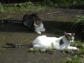 Cats of Jingtong, #9900