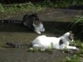 Cats of Jingtong, #9901