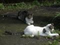 Cats of Jingtong, #9902