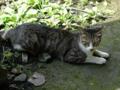Cats of Jingtong, #9922
