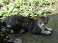 Cats of Jingtong, #9924