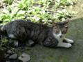 Cats of Jingtong, #9925