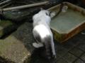 Cats of Jingtong, #9936