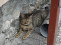 Cats of Houtong, #9981