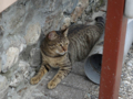 Cats of Houtong, #9983