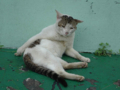 Cats of Houtong, #A208