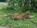 Cats of Houtong, #A210