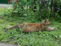Cats of Houtong, #A211