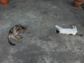 Cats of Houtong, #A218