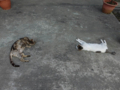 Cats of Houtong, #A219