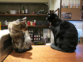 Cats of Minimal Cafe, #1731