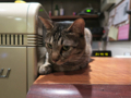 Cats of Minimal Cafe, #1735