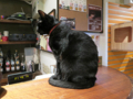 Cats of Minimal Cafe, #1737