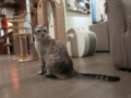 Cats of Minimal Cafe, #1753