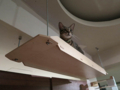 Cats of Minimal Cafe, #1758