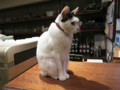 Cats of Minimal Cafe, #1764