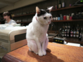 Cats of Minimal Cafe, #1765