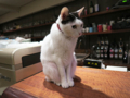 Cats of Minimal Cafe, #1766