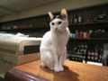 Cats of Minimal Cafe, #1767