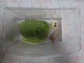 Snail, #A814