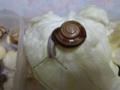 Snail, #A893