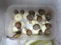 Snail, #A910