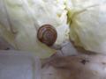 Snail, #A912
