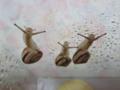 Snail, #B034 (Closeup)