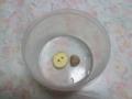 Snail(dead), #B097