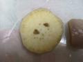 Snail(dead), #B100 (Closeup)