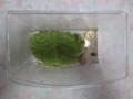 Snail, #A960
