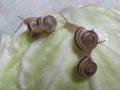 Snail, #B279 (Closeup)