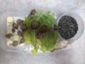 Snail, #B444