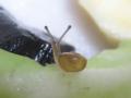 Snail, #B733 (Closeup)
