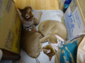 Beatrice & Elisabetta, #0580