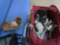 Beatrice, Umi & Koumi, #2381