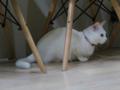 Cats of Neco Republic, #2948