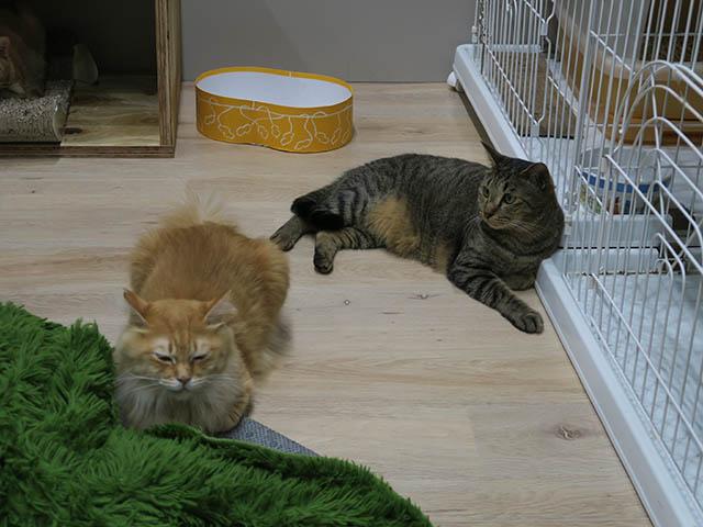 Cats of Neco Republic, #2979
