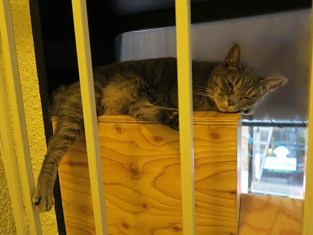 Cats of Neco Republic, #2980