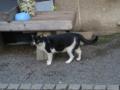 柳森神社の猫, #3069
